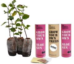 Grow Your Own Gin Berries