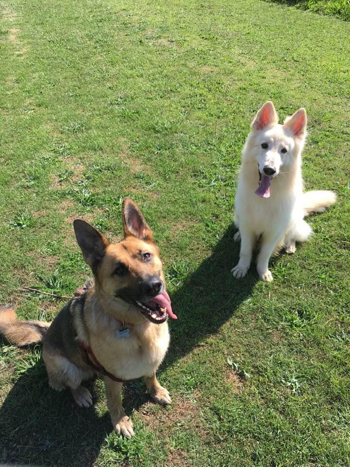 Juno and Noah